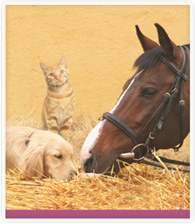Pet and Horse Owners